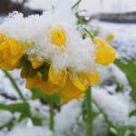 つかの間の雪景色。