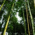 竹やぶを何とかしたい。
