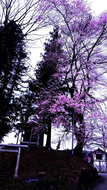 春なので、道つくる。