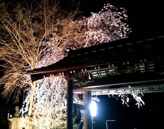 春の星見。