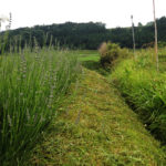 休日はひたすら草を刈る。