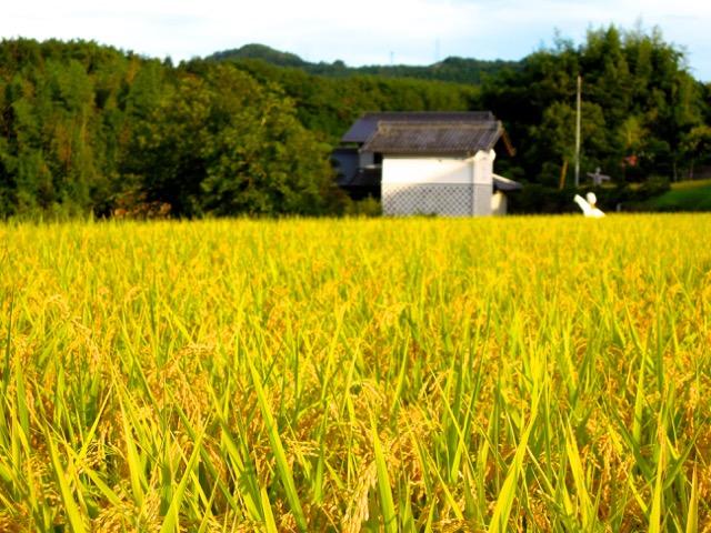 初秋の田舎。