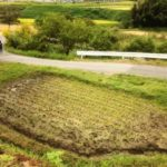交付金で草を刈る。