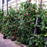 庭で楽しむ家庭菜園