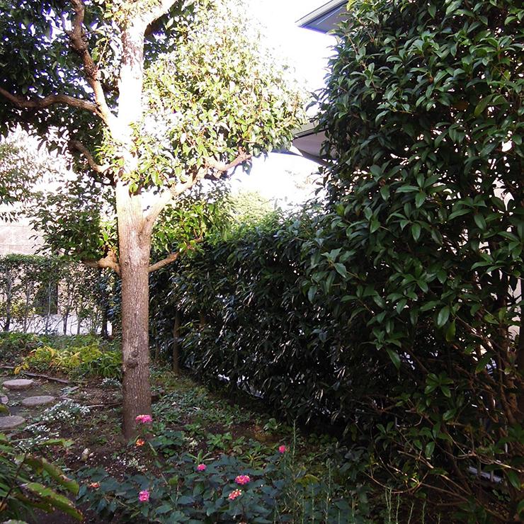 既存の庭1