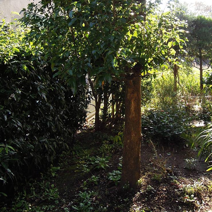 既存の庭2