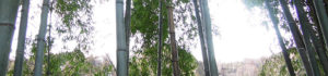 荒れた竹やぶを美しい竹林に