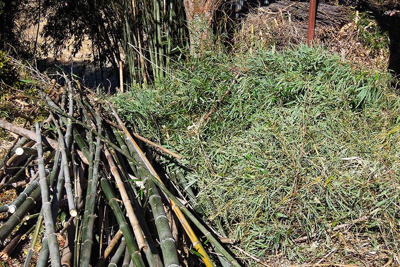 伐採した竹を切断