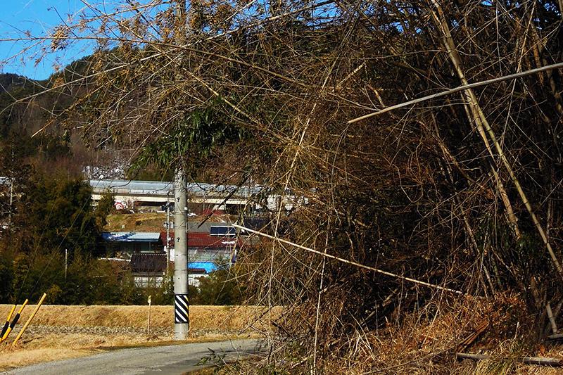 放置された竹が道路をふさぐ