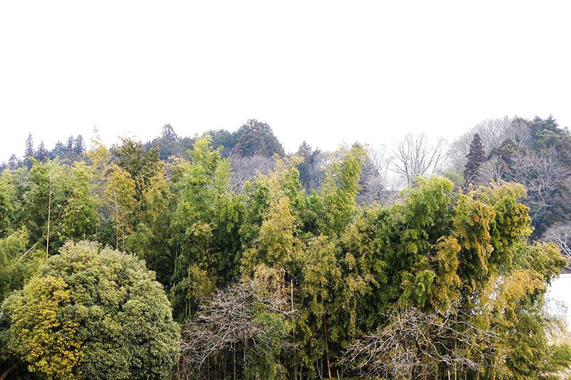 広がる放置竹林