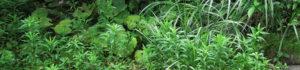 庭の雑草対策は、結局何がいいのか